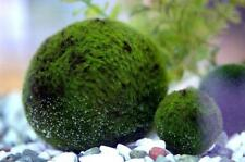 Nano Marimo x5#for biorb biube aquarium fish tank kit