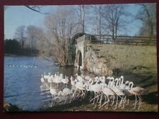 POSTCARD YORKSHIRE HAREWOOD - THE BIRD GARDEN CHILEAN FLAMINGOES
