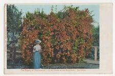 USA, The Beauty of Glazenwood, 10,000 Roses, California Postcard, B241