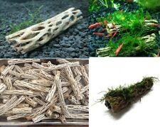 Cholla Wood 15cm holley bois mangrove racine crevettes nano aquarium aquascaping