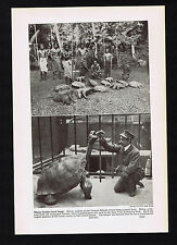 Giant Turtles & Tortoise-Samoan Islands - 1937 Image of History