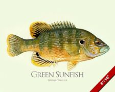 GREEN SUNFISH FISH PAINTING FRESHWATER FLY FISHING ART REAL CANVAS PRINT