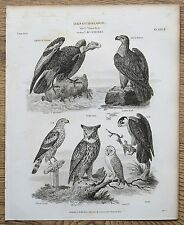 1820 CONDOR GOLDEN EAGLE Horned OWL Falcon ETC ANTICA INCISIONE STAMPA ETR