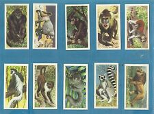 Cigarette / trade cards - AFRICAN WILD LIFE - 1961 Full set