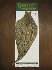 Fly Tying-Whiting Farms Pro Rooster Cape Grizzly Variant #A