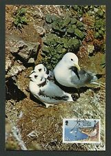 ISLE OF MAN MK VÖGEL MÖWE SEAGULL BIRDS MAXIMUMKARTE MAXIMUM CARD MC CM c9296