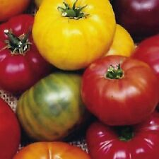 HEIRLOOM RAINBOW BLEND TOMATO MIX THE VERY BEST EVER 25 SEEDS ARE MIXED TOGETHER