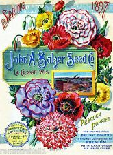 1897 Salzer Poppies Vintage Flowers Seed Packet Catalogue Advertisement Poster