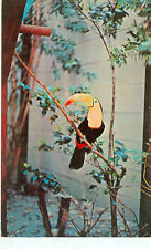 ST.PETERSBURG,FLORIDA-SUNKEN GARDENS-TOUCAN IN TREE-(BIRDS-470)