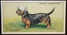 Dandie Dinmont Terrier   Original 1930's Vintage Coloured Card VGC