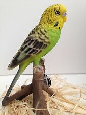 Budgie Budgerigar Bird Green Yellow Vivid Art Pet Pals Garden Ornament