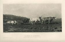 ANTIQUE CHAROLAIS OXEN COWS FURROW GARDEN FIELD NIVERNAIS ROSA BONHEUR PRINT