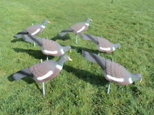12 PIGEON DECOY SHELL HIGH DEFINITION PAINTED DECOYING WITH STICKS PEGS SHOOTING