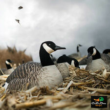 NEW ZINK AVIAN X AXF FLOCKED HONKER CANADA GOOSE 6 PACK SHELL DECOYS