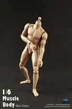 1/6 COOMODEL COO Standard Male Muscle Body NO: B34003 In Stock