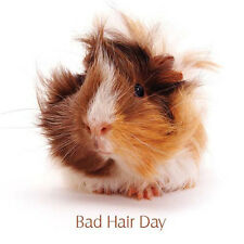 Guinea Pig Blank Greeting Card Bad Hair Day Funny Photographic Pet Card