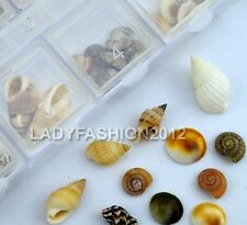 New Cute Multi-Shaped Natural Shells Nail Art Decorations Cell Phone Decals Kit