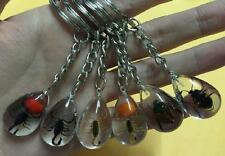 12 Keychain Real Mix Insect clear Scorpion mix key-chains