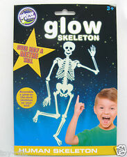 GLOW IN THE DARK HUMAN SKELETON BY BRAINSTORM - OVER 50 cm TALL - NEW & SEALED!