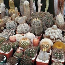 Cactus seeds - Cactus seeds MIXED Hybrid and rare variety of cactus