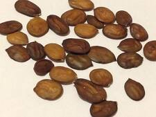 25 Japanese Wisteria Floribunda Seeds (Ships From Florida)