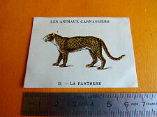 CHROMO 1939 CASINO LES ANIMAUX CARNASSIERS N°75 LA PANTHERE FELIN