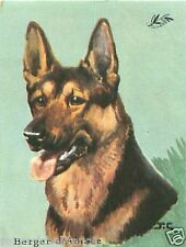 CARD BON POINT Berger allemand German Shepherd Deutscher Schaferhund Dog  60s