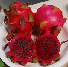 10 Graines  Hylocereus Undatus Pitaya DRAGON FRUIT Red Flesh seeds