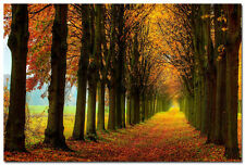 Autumn Forest Path In The Morning Nature Art Silk Wall Poster Photo 24x36 inch