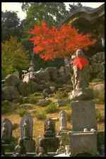 334069 Miyajima Buddha With Red Japanese Maple A4 Photo Print