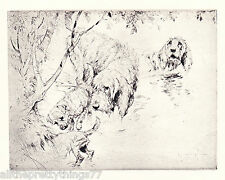 DOG & PUPPY Otter Hunting in STREAM Water Vintage 1929  MATTED Pup Picture