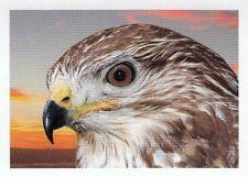 Rewe Unser Deutschland Sticker Nr. 23 Mäusebussard 023 2013 NEUWARE