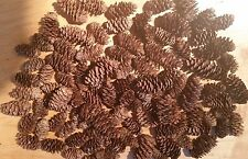 200 REAL SPRUCE CONES SPRUCE FUR PINE 1 - 2  INCHES HEAT SANITIZED