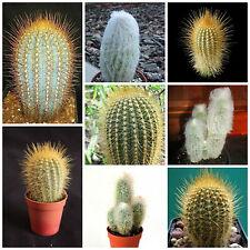20 semi in miscuglio di Austrocephalocereus mix ,piante grasse,seed cactus mix