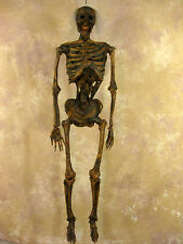 Corpsed Harvey Life-Size Human Halloween Skeleton, Haunt Skeletons NEW