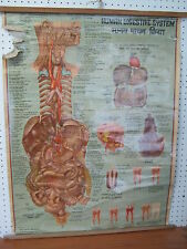 Vintage Indian Human Anatomy Digestive System Chart , Hindi/English Script