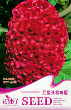 40 Original Package Seeds Giant Head Shaped Cockscomb Seed Celosia Cristata A256