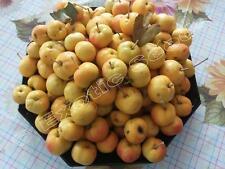 Crataegus azarollus 'gelb', Acerola, Welsche Mispel, 100 Samen