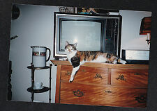 Old Vintage Photograph Cute Calico Cat Laying on Dresser By Retro Television Set