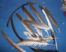 natural feathers from roosters ducks and geese hand washed in dawn 4 to 6 inch