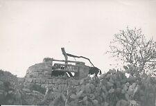 ÎLE DE MAJORQUE c. 1935 - Un Puit dans la Campagne d'Alcùdia  Espagne - P 530