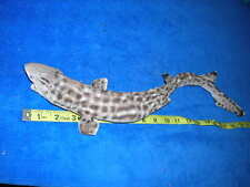 REAL STUFFED Shark/Taxidermy/jaw/jaws/teeth/fish/sharks/skeleton/fish/mount