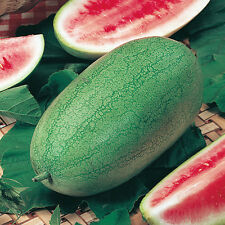 Water Melon - Charleston Gray - 15 Seeds