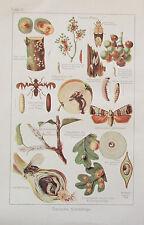 1931 TIERISCHE PILZLICHE SCHÄDLINGE alter Druck Antique Print Lithografie