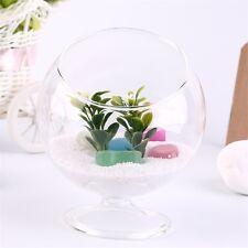 Home Deco Hydroponic Aquarium Fish Glass Vase Tank Plant Container Terrarium FE