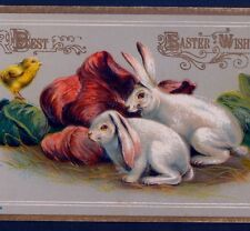 LOP-EARED BUNNY RABBITS MUNCH RED CABBAGE,CHICK,CHROMOLITHOGRAPH,OLD POSTCARD