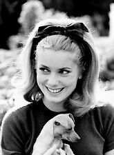 PHOTO CATHERINE DENEUVE  - 11X15 CM  # 2