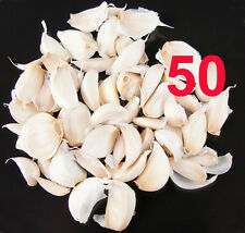Porcelain garlic seed cloves for giant bulbs huge sweet & mild 50 cloves