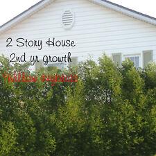 Willow Hybrid Super Hardy Tree/Bush Cutting (1) Fast Growing Privacy WindBreak