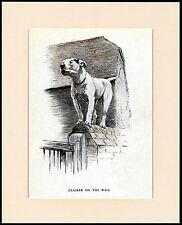 BULL TERRIER CRACKER ON A WALL GREAT DOG PRINT MOUNTED READY TO FRAME